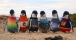 oldest-man-australia-knits-penguin-sweaters-1-728x486