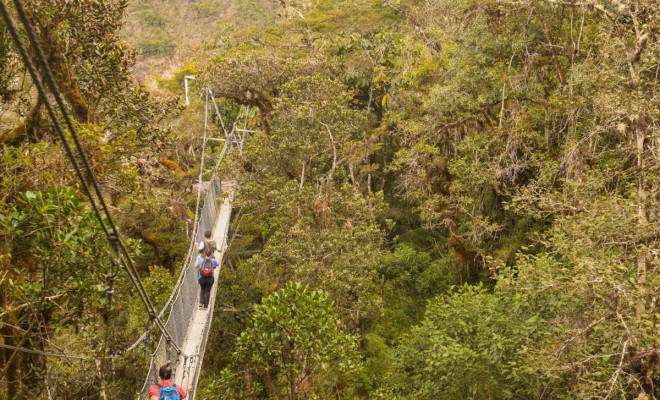 4-wayqecha-biological-station-canopy-walkway-660x400